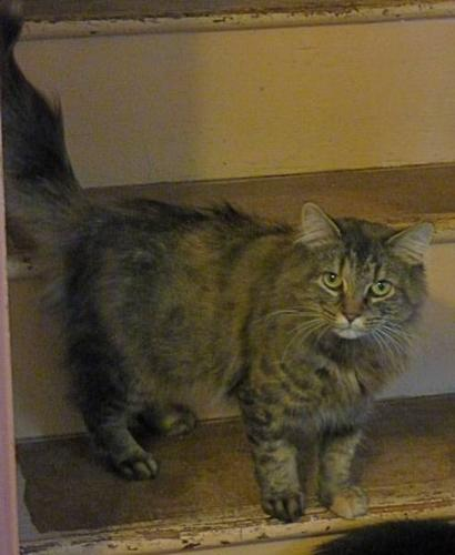 2 beautiful cats looking for forever homes