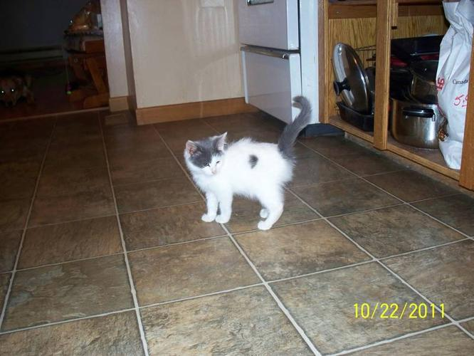 Adorable Kittens to Give Away to a Good Home - Kittens Have Home
