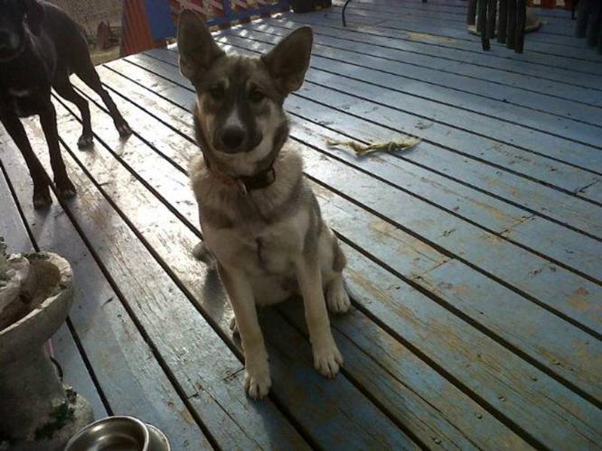Beautiful Female Pup