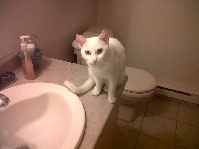 Found White Cat !!