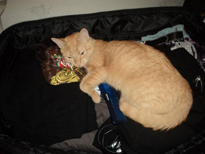 FREE 4 year old ORANGE TABBY to good home GREAT MOUSER!!