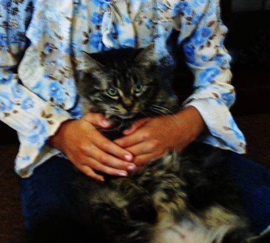 FREE CAT ''MUST GO''