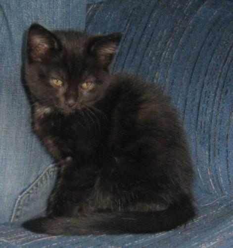 Free Cute House Kittens!