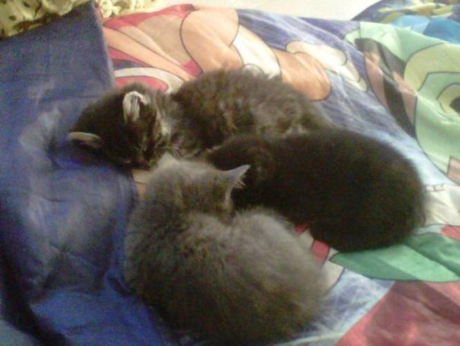 Free kittens to go too loving homes