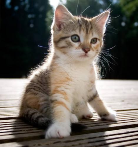 Free Kittens!