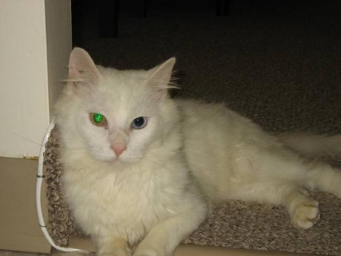 Gorgeous Dawson, Dumped near the Metro Animal Shelter!