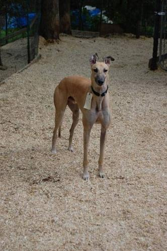 Greyhound Pets of Atlantic Canada - Give a Grey a forever home!