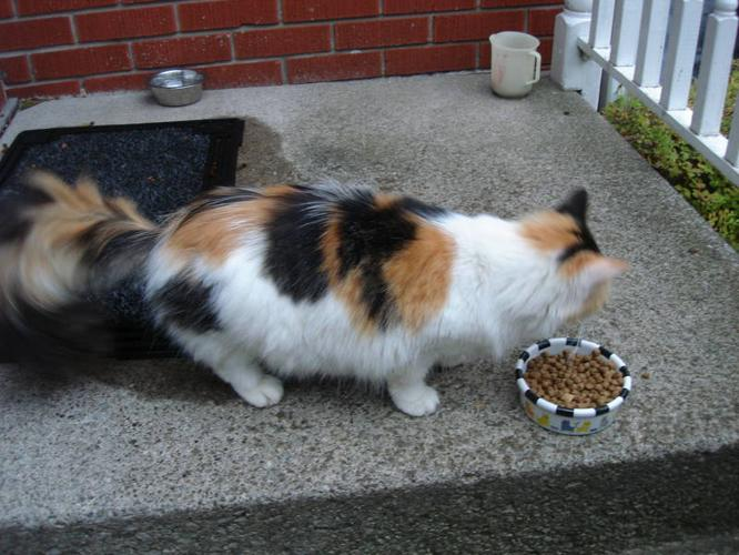 LOVABLE CALICO