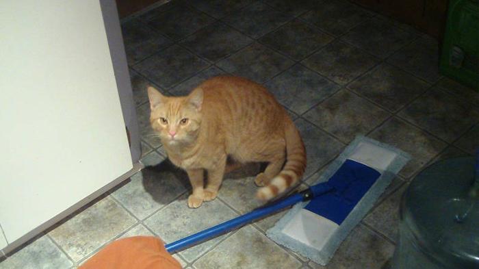 MOST AFFECTIONATE CUTE KITTEN NEEDS A GOOD HOME ASAP