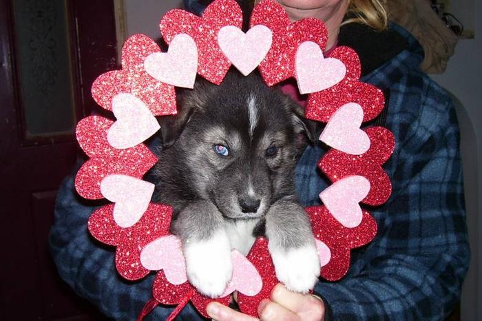 ****Ready Feb 14 * Valentines Day***** 1 male available