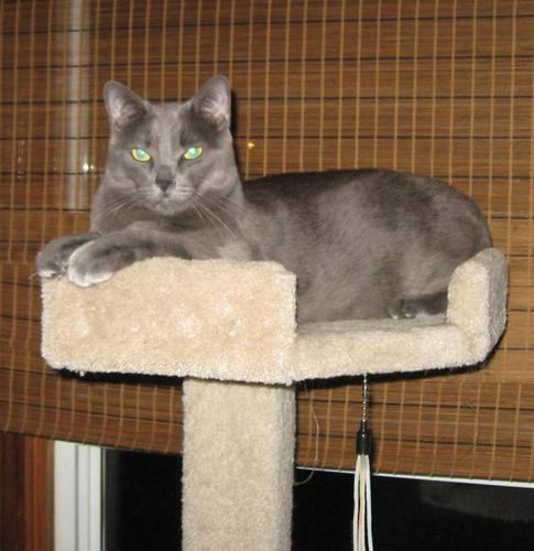 'Retracted', cat now has a new home