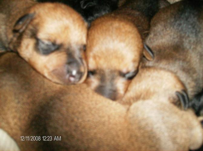 Rotti X puppy's to go to a good home.
