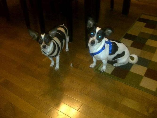 Size Small Dog Rescue..Binky & Pickles need a forever home!!