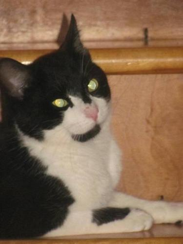 Sylvester needs a home that's for Keeps! (He's fixed)