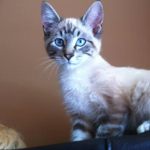 Two 12 week Kittens