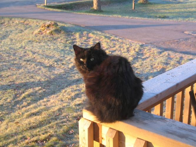 Wanted: KINGSTON- OUR CAT MISSING! IF FOUND PLEASE CONTACT 902-765-2567