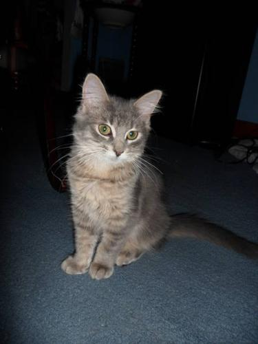 Wanted: Looking for a loving home for Lilly