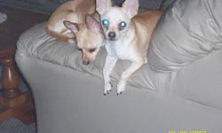 Hi are your looking for a male to breed look no more you found my dogs. They are father and son. They get with kids love to play. I am moving and they cant come and i feel bad. There names are zack and cody.