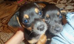 Hi,   I have 2 puppies, they are both chihuahua/dachshund mixed brother and sister. I cant keep them! I just dont have time for them with having 2 children one a toddler. I am a single mom and returning full time to school in January, I just dont have