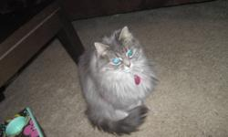 We have 2 older cats, age 7 and 11 in good health, free to a good home. We are needing to find a new home due to an allergy in the family. We have a variety of accessories (bed, brushes, toys) that will go with them. Please contact us and tell us a bit