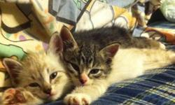 I am needing to find a home for my two kittens The female is a tabby The male is a tabby cross siamese They are brother and sister and need to go to a home TOGETHER as the female gets scared without her brother and wont stop meowing till she is back with