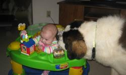 i have 2 pure bred st.bernards, females, dozer is 10 months old and ellie just turned 1. Both are house trained and very very good with children we have 4 kids ageing from 5 months to 5 years and the dogs are very easy with them. We really hate to see