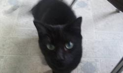 We are unable to keep the cats and so they need to go ASAP. There are two females, Midnight-- all black and just over 1 year old, and Fluffy,  grey with beautiful markings, just under 1 year old. They are not fixed. They are absolutely wonderful to have