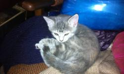 Need Immediate Homes for adorable kittens (four in all), kitten food supplied, littter trained.  Please contact Anne or Tony at (807) 623-6506 leave brief message if unavailable, also will help out for first visit to vet.  Thank you.