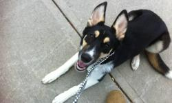 Cute and lovable 8 month old husky/doberman named Summer needs good home. Summer is crate trained and walks very good on a leash as well as off the leash, she loves being outside and meeting new people. Summer is a very loving dog and loves to be near you