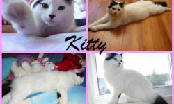 """""""Kitty"""" *free to good home Female and about 7-8 months old Kitty litter trained and dewormed """"I WILL NOT GIVE HER TO JUST ANYBODY"""" I would love for her to go with an older couple or someone without kids, because that's the reason I'm giving her away,"""
