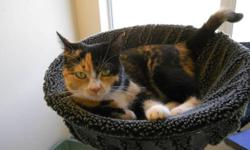 Kali is a very friendly cat that will make a lucky family very happy! She is very affectionate and enjoys cuddle time! Kali would prefer a home without other cats, but has shown she can adapt well in an environment with other cats provided they are laid