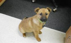 Kiku and her siblings are absolutely adorable, sweet little pups! They are all spayed/neutered and vaccinated and they are each ready for a home of their very own! Consider welcoming one of these cuddly pups into your family! Adopt for only $200.00!