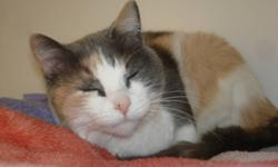 Breed: Dilute Calico   Age: Adult   Sex: F   Size: L Hello. I am new to adoptable so keep checking. So far I am very friendly, love to cuddle, am great with other cats and dogs as well.   View this pet on Petfinder.com Contact: Bonnyville District SPCA  