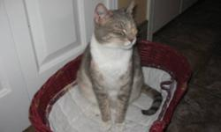 Breed: Dilute Calico   Age: Adult   Sex: F   Size: M This is Kitty Lou, just 4yrs old. She's a wonderful cat and will make somebody a great companion. Please get in touch with S.A.R.A. today.   View this pet on Petfinder.com Contact: SARA Society-Save