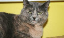 Breed: Dilute Tortoiseshell   Age: Adult   Sex: F   Size: M DOB: July, 1, 2007 Sophia is a shy cat so she would do best in a quiet home, but she gets along well with other cats and dogs. She is a mother cat and one of her kittens still lives with her