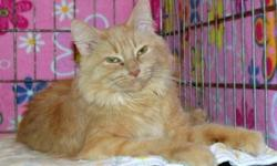 Breed: Domestic Medium Hair   Age: Adult   Sex: F   Size: M   View this pet on Petfinder.com Contact: Winnipeg Pet Rescue Shelter | Winnipeg, MB