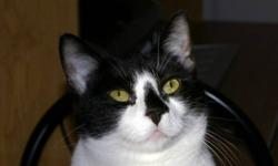 Breed: Domestic Short Hair-black and white   Age: Adult   Sex: F   Size: M DOB August 2, 2009. Jasmine has cute little spot on her nose and is very kind and loving, very much like her sister Jewel. They are always together and both enjoy being brushed and