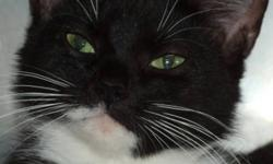 Breed: Domestic Short Hair-black and white   Age: Adult   Sex: F   Size: M Born about 2008 Hillary was one of a batch of cats and kittens which were dropped off at the shelter, by people who believed they were abandoned by their owners. Hillary is mom to