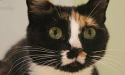 Breed: Domestic Short Hair Calico   Age: Adult   Sex: F   Size: M Hi there, I'm Liara. I've been pretty quiet so far at the shelter. I like being pet and talked to, not to mention being fussed over. I am fond of my two sons, Garrus and Wrex and II like