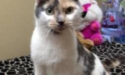 Breed: Domestic Short Hair   Age: Adult   Sex: F   Size: S KT 2 Year Old Female Domestic Short Haired KT is a sweet girl who loves being around people and being petted.   View this pet on Petfinder.com Contact: Homeward Bound City Pound   Dartmouth, NS