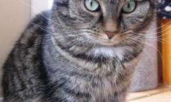 Breed: Tabby   Age: Adult   Sex: F   Size: M DOB August 2005 Say hello to Phoebe. What a sweetie! She is your perfect Tabby. Phoebe is at her best when she is with her sister Lucy Lou. Always content and kind, she quietly follows her foster mother and
