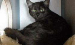 Breed: Tabby - black Silver   Age: Adult   Sex: F   Size: M Poor Nancy is a very lucky cat. Nancy was dumped, with no container, on the shelters front porch early one morning, and luckily a staff member witnessed it. They managed to grab Nancy before she