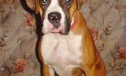 Breed: Boxer   Age: Adult   Sex: F   Size: M Choocha is a 1yr old purebred Boxer. She is high energy & loveable. Choocha has some basic training & is currently in the H.O.P.E program to continue her training. Choocha was tested for allergies & is