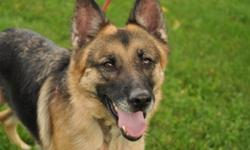 Breed: German Shepherd Dog   Age: Adult   Sex: F   Size: M Roxy is a 4 yr old german shepherd, fixed , shots and mic chipped. Roxy has been with Bow Wow Rescue for over 1 month, she was an owner surrender. Roxy's hair was in very poor shape because of