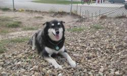Breed: Husky   Age: Adult   Sex: F   Size: M Lucky is approximately 6 years old. She was surrendered to us when her family moved into housing that did not allow pets. In that home she lived with another big dog and two cats, so she's used to other