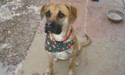 Breed: Boxer   Age: Adult   Sex: F   Size: L Hi my name is Pluto. I am very new so keep checking for updates on me. So far I don't seem to mind other dogs. -UPDATE- I am good with other dogs. I am house trained but I need a little bit of manner training.