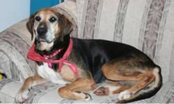 Breed: Shepherd Hound   Age: Adult   Sex: F   Size: L Please read Grace's story and help if you can: Grace had been sitting in a shelter for some time and finally her time was up and she was slated to be euthanized. All of us Ugly Mutters