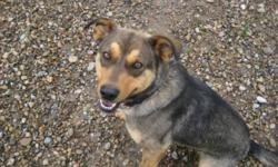 Breed: Shepherd Husky   Age: Adult   Sex: F   Size: L Juno was picked up by bylaw for running at large and was never claimed. When she first arrived, she was scared of the world! She was scared of people, of going outside, of the door. After only a few
