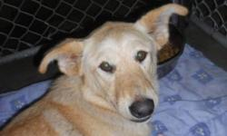 "Breed: Yellow Labrador Retriever   Age: Adult   Sex: F   Size: L As an SPCA dog for my $225 adoption fee I will be ""fixed, Micro-chipped, De-wormed and will have had my first set of vaccines.   View this pet on Petfinder.com Contact: Peace River SPCA 