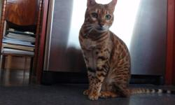 Ben is lonely because owner is not home enough.  He is looking for a loving family who will give him lots of attention.  He loves to play and interact with people.